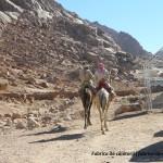 Beduini si camile - Sharm el Sheikh