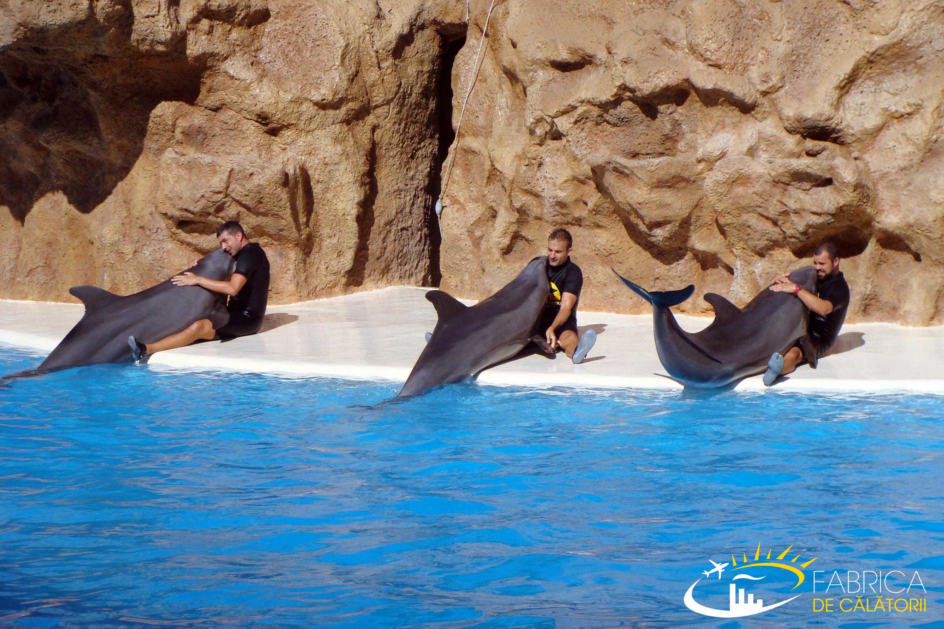 Impresii din Loro Parque Tenerife – galerie foto